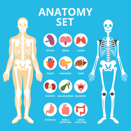 conjunto de la anatomía, la infografía anatomía. iconos humanos órganos internos establecido, la estructura del cuerpo, esqueleto Ilustración de vector