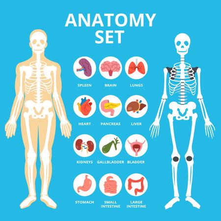 Zestaw anatomia, anatomia infografiki. Ludzkie narządy wewnętrzne ikony ustaw, budowa ciała, szkielet Ilustracja