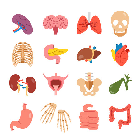 Human organs set. Modern concepts. Bones and internal organs vector icons. Colorful flat design illustration Stock Illustratie