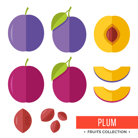 Plum. Damson purple plum and parts, slices, pits, leaves, core. Set of fruits. Flat design graphic elements. Vector illustration.