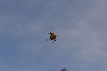 bodyscape: Spider and blue sky