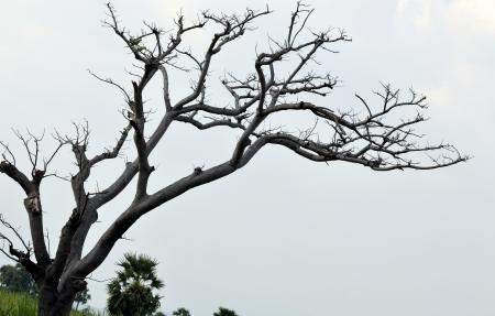 단일 구약과 죽은 나무 스톡 사진