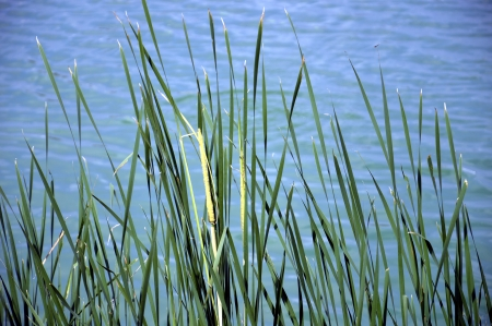 Grass on Water Background