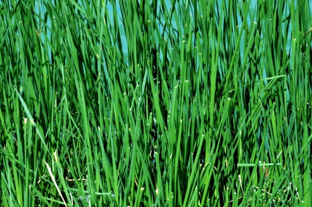 Green grass background Stock Photo - 17323026