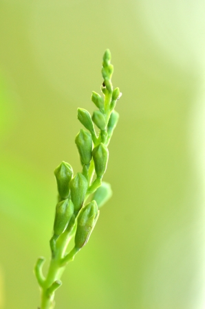 Buds with green background blurred