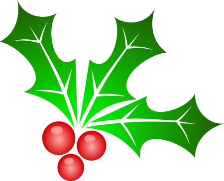 Vector illustration of holly leaves and berries Illustration