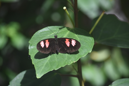 black and pink butterfly on a leaf