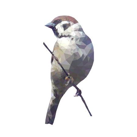 birds on branch: Vector low poly sparrow. Vector illustration polygonal bird on branch