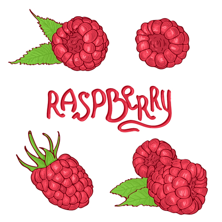 Hand drawn raspberry set . Sketch style vector illustration.