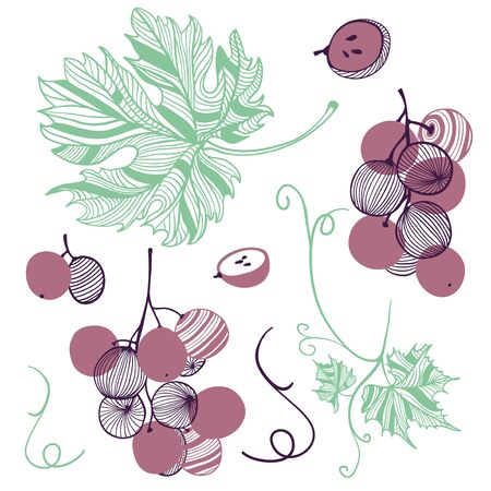 Collection of violet grape. Fruit, leaf and piece of grape berries. Vector hand drawn illustration in modern trendy flat style for web, print.