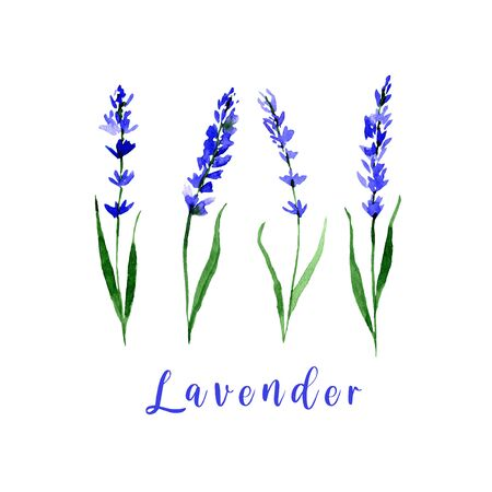 Watercolor lavender set. Collection of hand drawn flowers isolated. 版權商用圖片