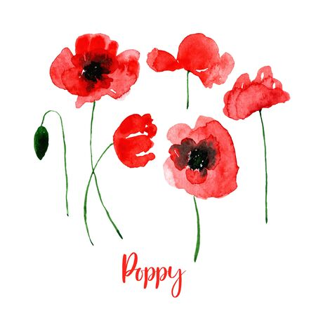 Watercolor red poppy flower set. Collection of hand drawn flowers isolated