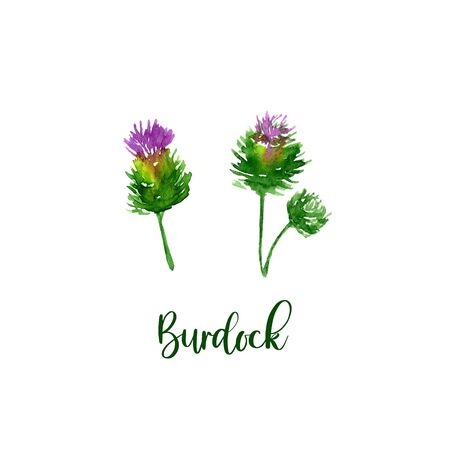 Watercolor Purple Burdock set. Collection of hand drawn flowers isolated. Wild flower illustration branch
