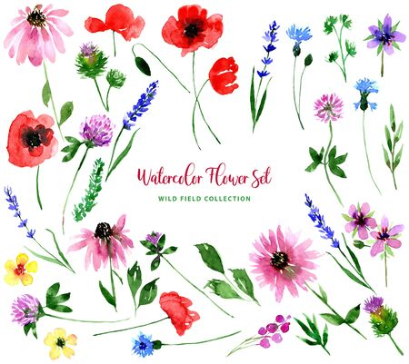 Watercolor wild field flowers set. Collection of isolated images of poppy, stork, clover, lavender, cornflower, echinacea, burdock. For print, pattern, textile, wallpapers, invitations, cards
