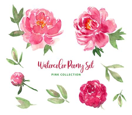 Watercolor trendy modern loose style pink peony flowers and leaves set. Collection of isolated images of pink, red florals. For print, pattern, textile, wallpapers, invitations, cards