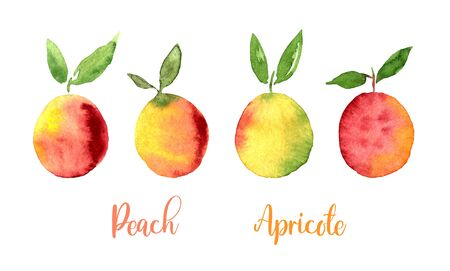 Peach Apricote Yellow Orange Pink watercolor set images. Bright hand painted berries isolated on white background. Collection in modern trendy style for card, poster, banner, print textile, fashion 版權商用圖片