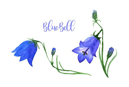 Watercolor Blue Bell set. Collection of hand drawn flowers isolated. Wild field flower illustration for cards, textile print, fashion, banner, poster 版權商用圖片