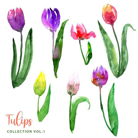 Watercolor loose style tulip flowers and leaves set. Collection of isolated images of pink red purple, yellow, blue, orange. For print, pattern, textile, wallpapers, invitations, cards