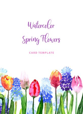 Watercolor beautiful loose style pink, red, violet, yellow tulip flower and muscari border frame. Modern color trendy template for invitation, wedding, banner, greeting card design, poster. 版權商用圖片
