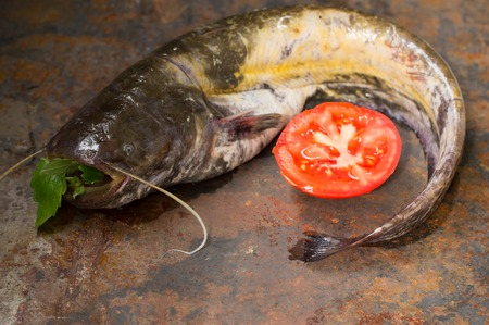 Raw catfish on an old table. Close-up Stock Photo