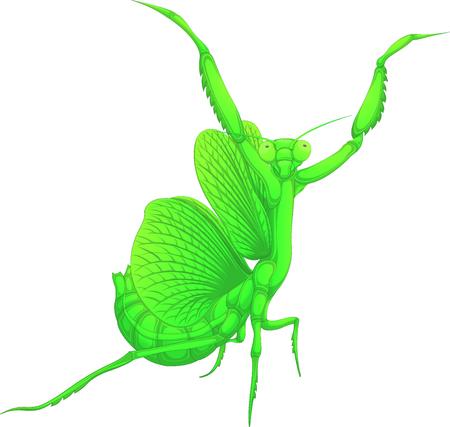 Mantis, painted cartoon character, vector illustration