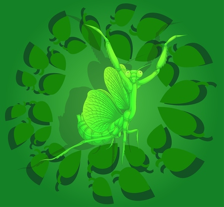 Mantis, painted cartoon character, vector illustration. Insect on the background of green foliage