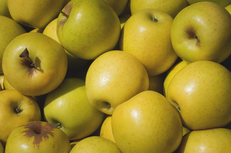 Yellow Apple for sale on market. Agriculture background. Top view. Close-up