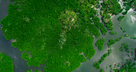 Aerial view of mangrove forest and river on the Siargao island. Philippines