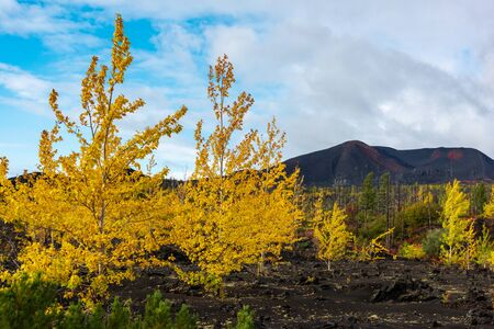 Autumn landscape in Kamchatka, Russia. Yellow and green trees against the background of mountains covered with clouds. Фото со стока - 133549348