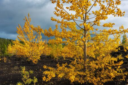 Autumn landscape in Kamchatka, Russia. Yellow and green trees against the background of mountains covered with clouds. Фото со стока