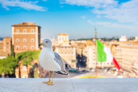 Seagull is looking into the camera on Piazza Venezia in Rome against the background of the Italian flag