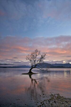 Wanaka Tree on Lake Wanaka. New Zealand