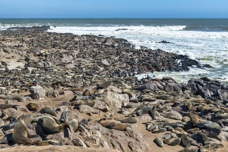 Namibia, Africa. Seals on the beach at Cape Cross, Skeleton Coast Stock Photo