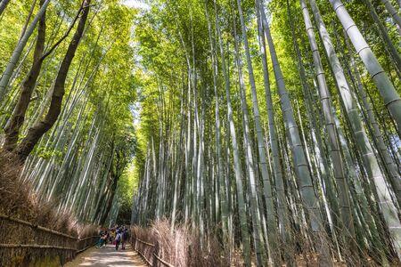 Kyoto Japan. Arashiyama Bamboo Grove Stock fotó