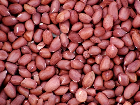 oilseed: Peanuts, a major oilseed and food ingredient