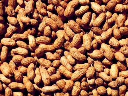 pigmy: Ground Nuts Stock Photo