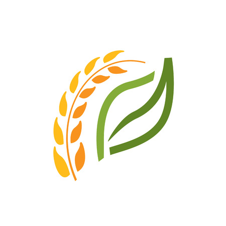 wheat spike with a leaf illustration, elegant wheat with an outline of leaf, natural symbol, symbol design, isolated on white background