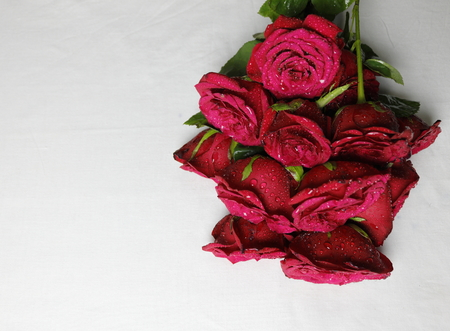 A bunch of red roses, Roses meant for greetings to express love and romantic feelings Stock Photo