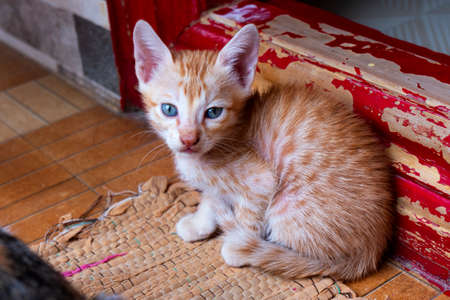 orange striped cute kitten sitting in house