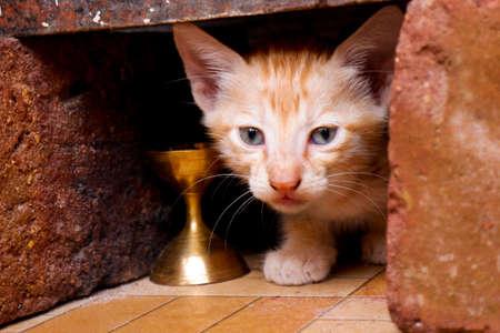 a closeup view of cute kitten looking hidden in bricks