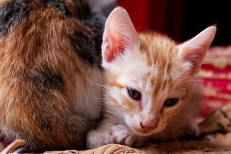 front view of cute kitten looking downside in house Imagens
