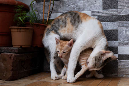 a mother cat cleaning her kitten in house