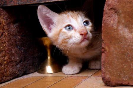 a closeup view of cute kitten upside looking hidden in bricks