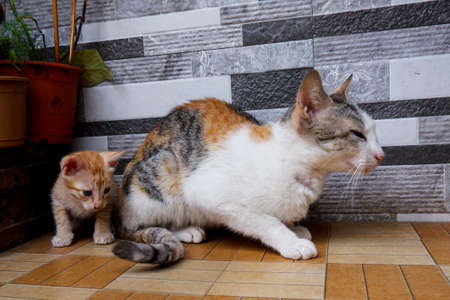 a mother cat sitting & kitten playing with tail on floor