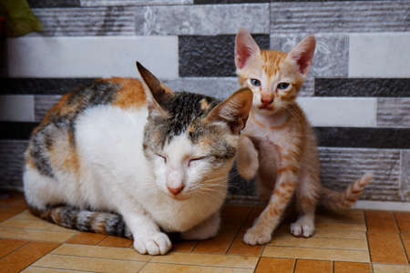 a front view of mother cat & kitten sitting on floor