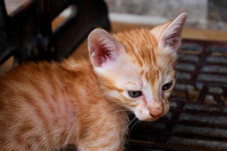 side view of cute kitten looking downside in house
