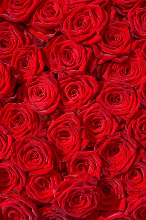 floridity: Bunch of red roses close together; Special Moments; In love
