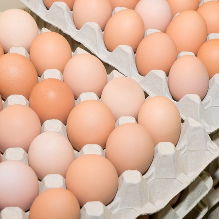 Brown chicken eggs in cardboard egg cartons