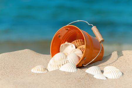 Bucket of white seashells on summer beach