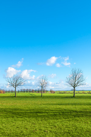 Sunny landscape with meadows, leafless trees and few clouds on blue sky